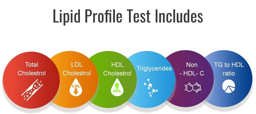 What Is Lipid Profile?